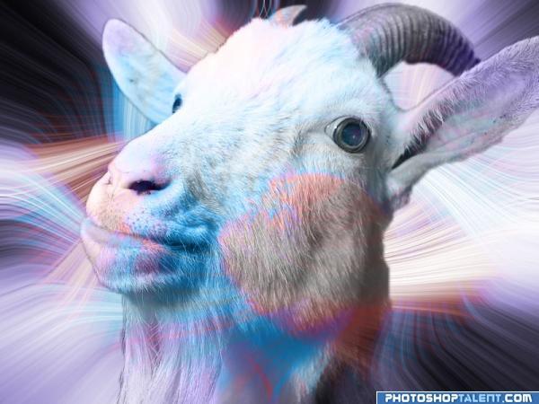 goat-heads_483ef28f913e11