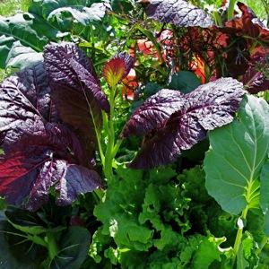 In honor of Keener's hobby, gardening