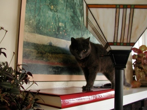 Cat on Red Book