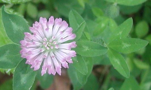 1flower2
