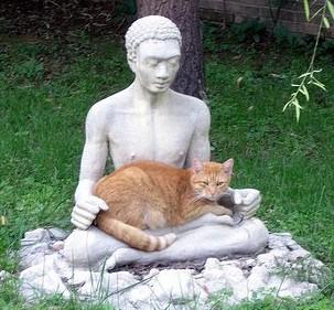 catbuddha