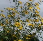 cloudy flowers monica cassani gianna kali
