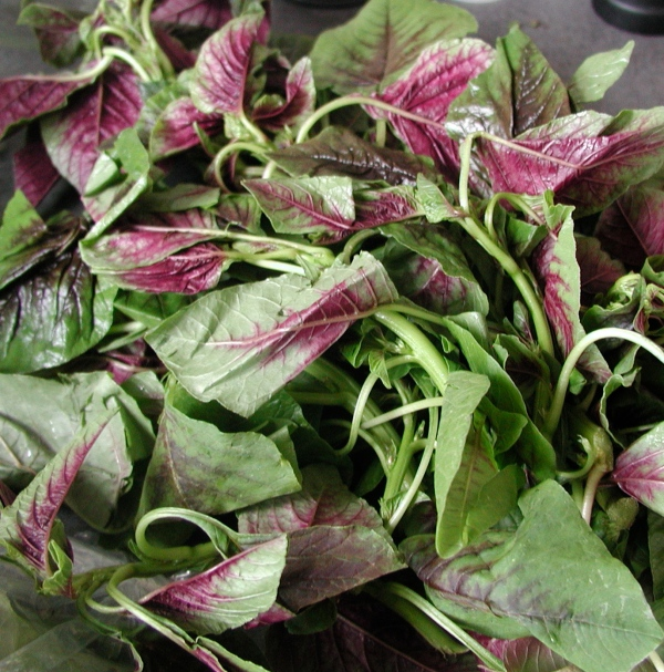 Beautiful red and green amaranth greens