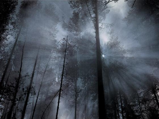 1dark-forest