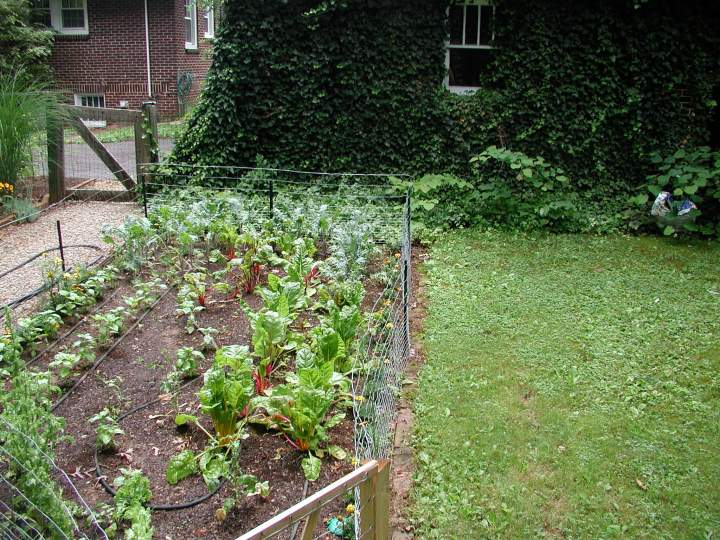 Part of the veggie garden earlier this year