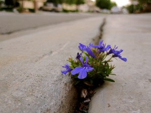 flower in crack