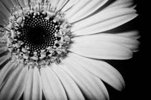 flower bw