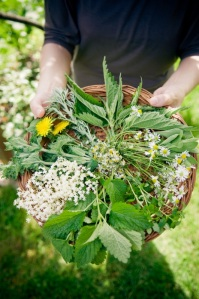 Selection of wild herbs in small basket.