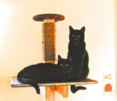 kitties1