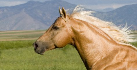 horse-head-profile-wallpaper-4