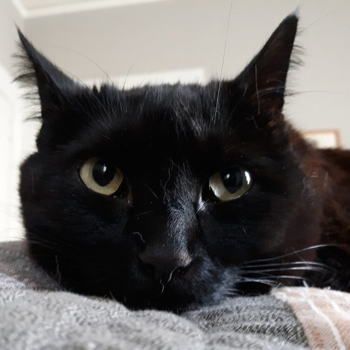 Beautiful black cat face -- Everything Matters: Beyond Meds